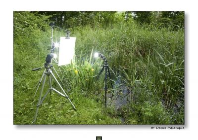 art macrophotographie projet macro proxi meet your neighbours set up-6