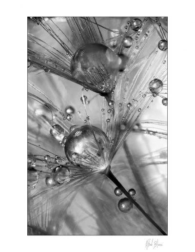 Focus stacking de Alfred Blaess pour le site art-macrophotographie