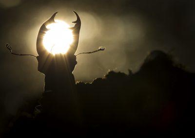 Le roi du crépuscule