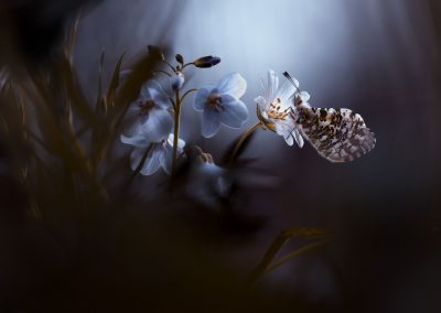 In your dreams, everything is allright-Photo de Fabien Bravin pour le site art-macrophotographie
