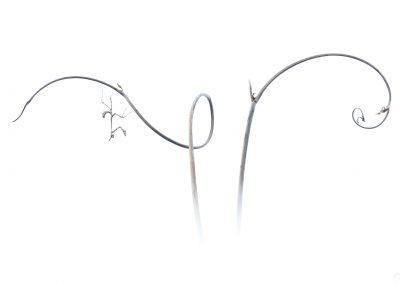 Curl-Thibault Andrieux- pour art-macrophotographie