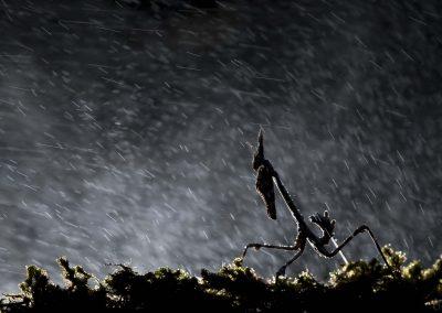 Storm-Thibault Andrieux - pour art-macrophotographie